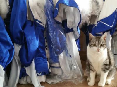 Katze vor Gardekostümen