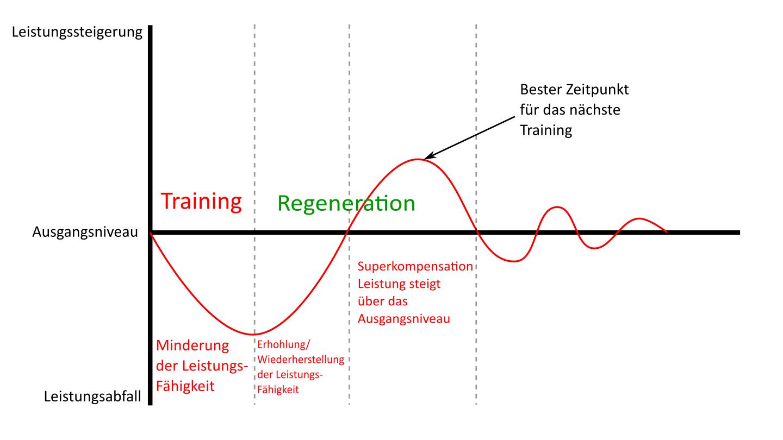 Modell der Superkompensation erklärt